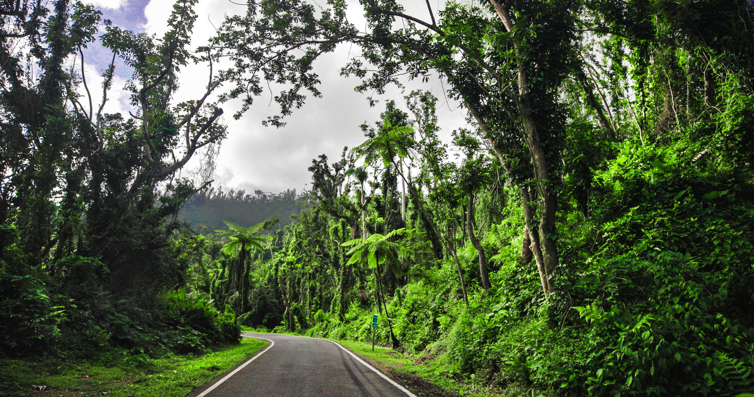 A stretch of road surrounded by verdant forest.