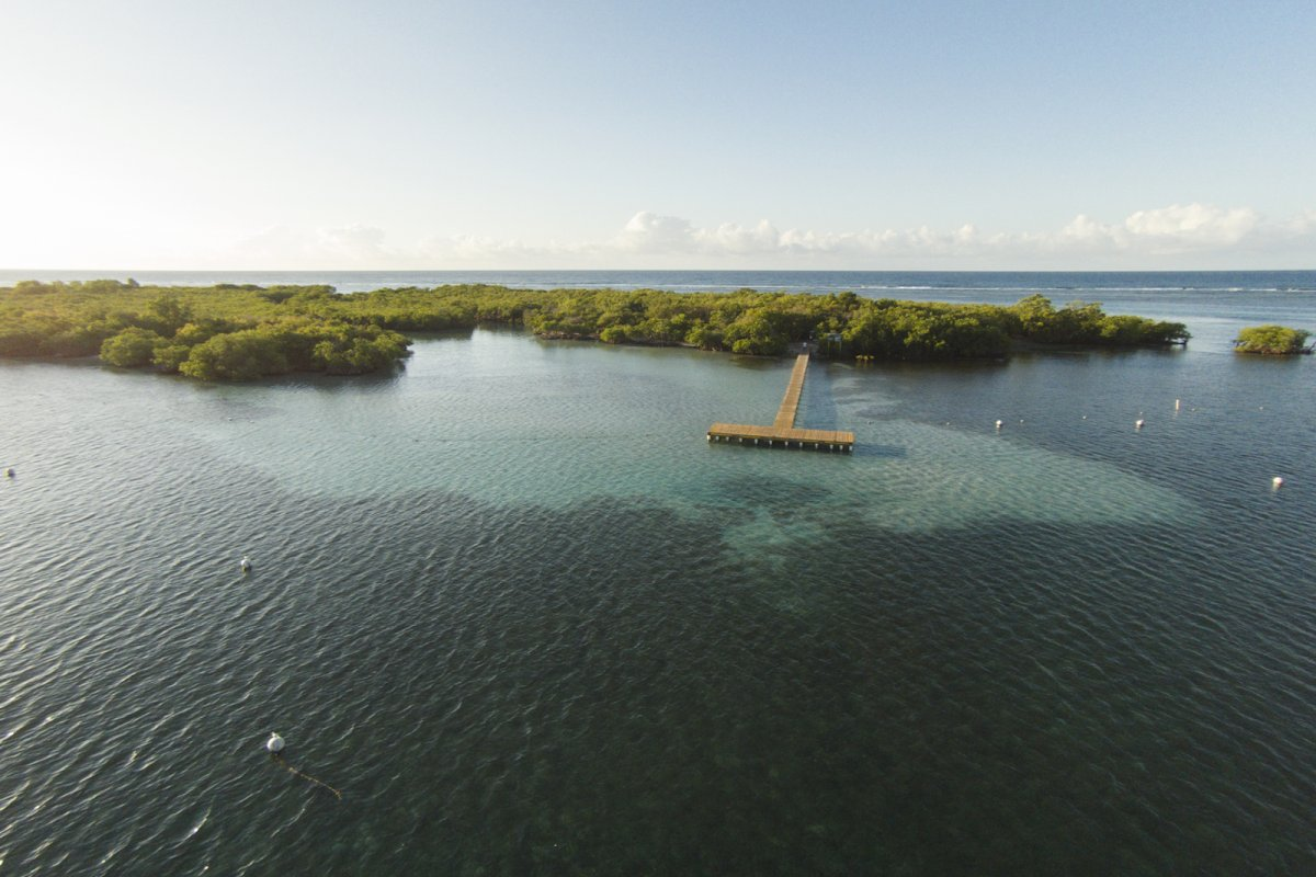 Aerial view of the mangrove island Cayo Aurora, also known as Gilligan's Island.