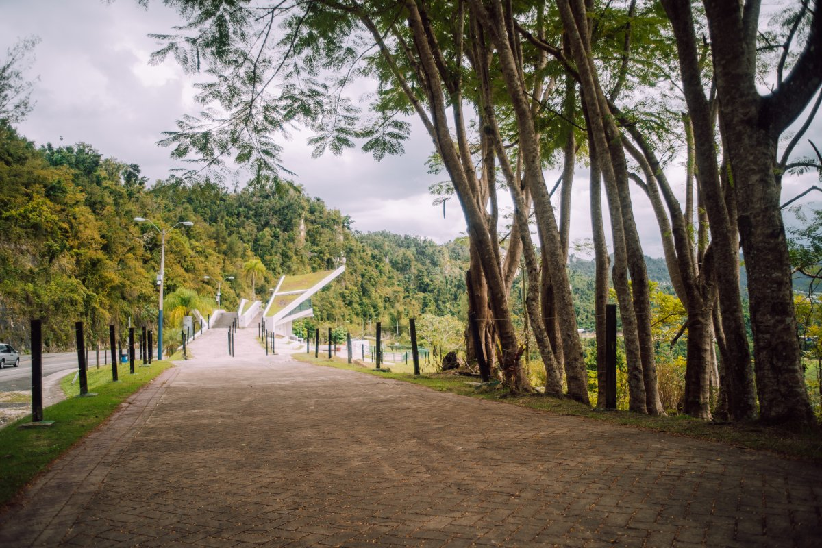 A wide path lined with trees at Paseo Lineal Juan Antonia Corretjer in Ciales.