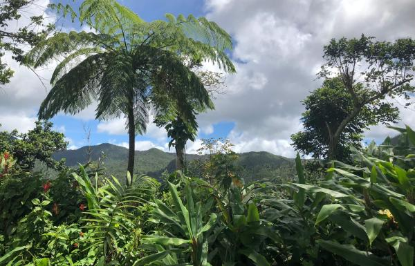 El Yunque rainforest