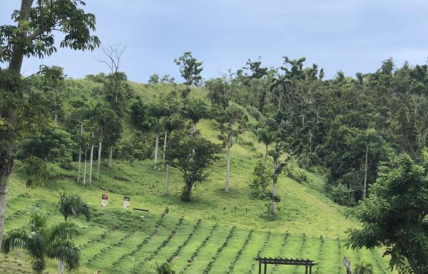A lush landscape at Hacienda Munoz, a coffee plantation.