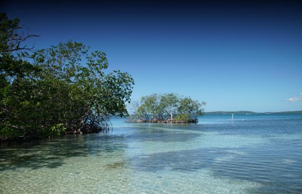 View of the mangrove island known as Gilligan's Island in Guánica.