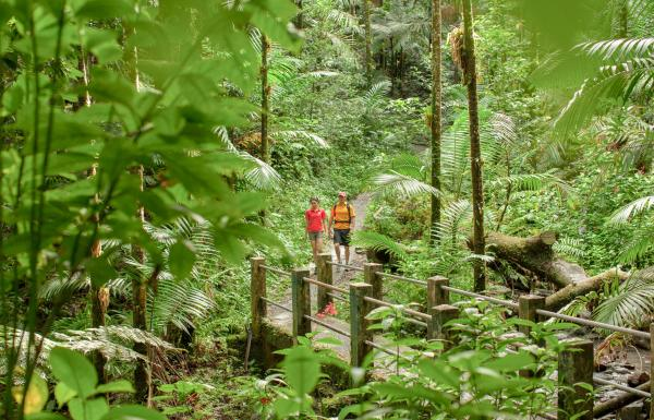A couple of people walk along a trail surrounded by lush green forest