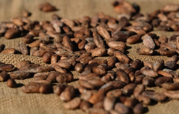 Puerto Rican Coffee Beans