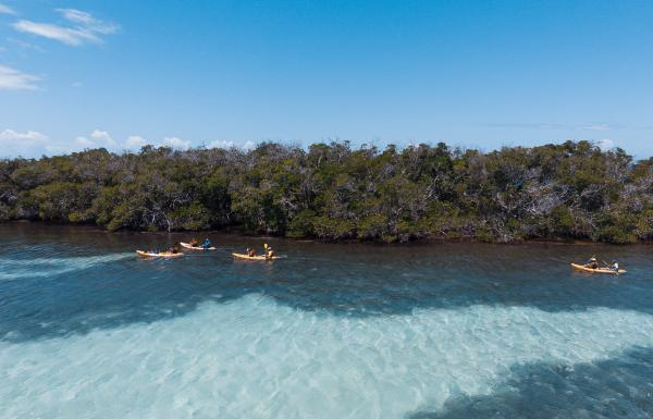Kayaking at La Parguera