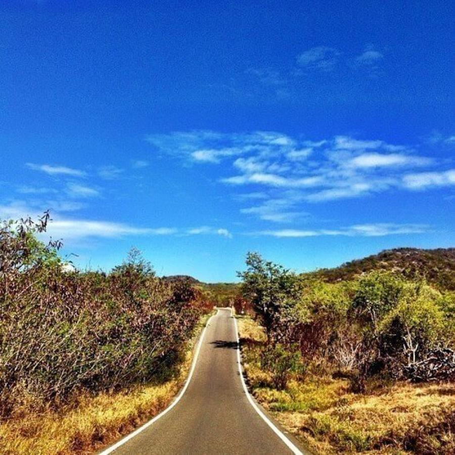Road through Guánica State Forest & Biosphere Reserve, a dry forest.