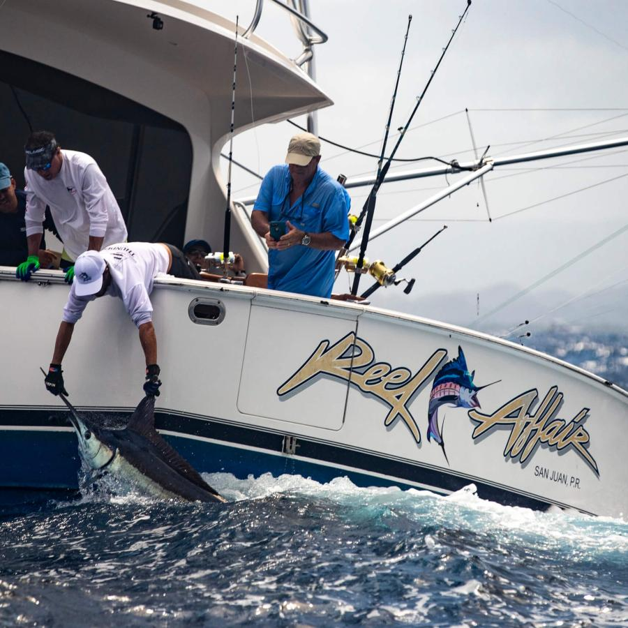 Catch and release of a marlin in San Juan.