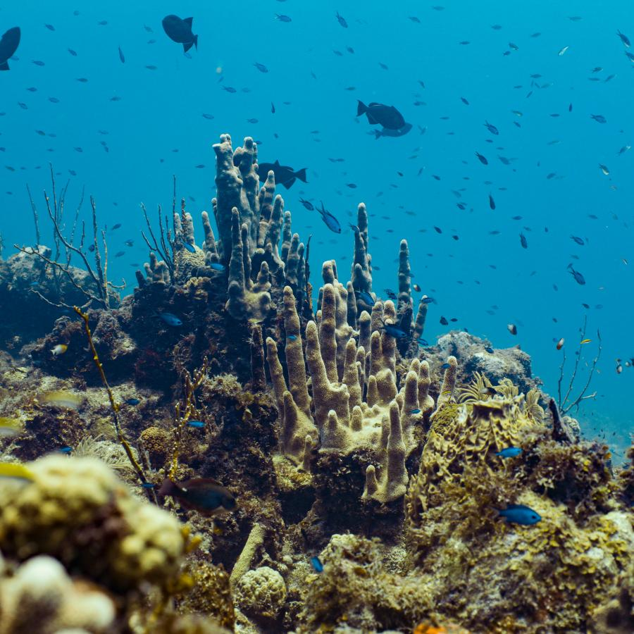 Coral reefs sighting while diving in Mona Island